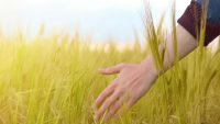 Aziende che possono usare gli impianti a biomassa