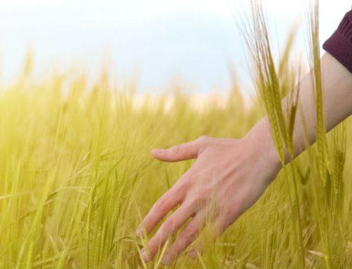 Tutte le aziende che possono usare gli impianti a biomassa